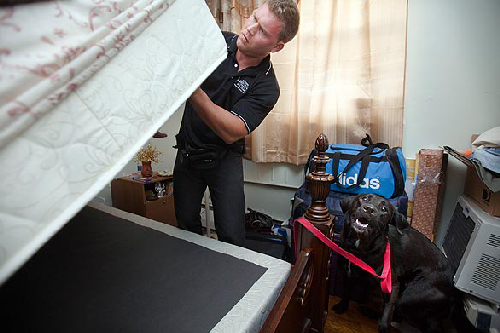 Many Pest Control Companies Especially Those That Use Bed Bug Detection Dogs  Are Riding High Despite The Economic Recession.